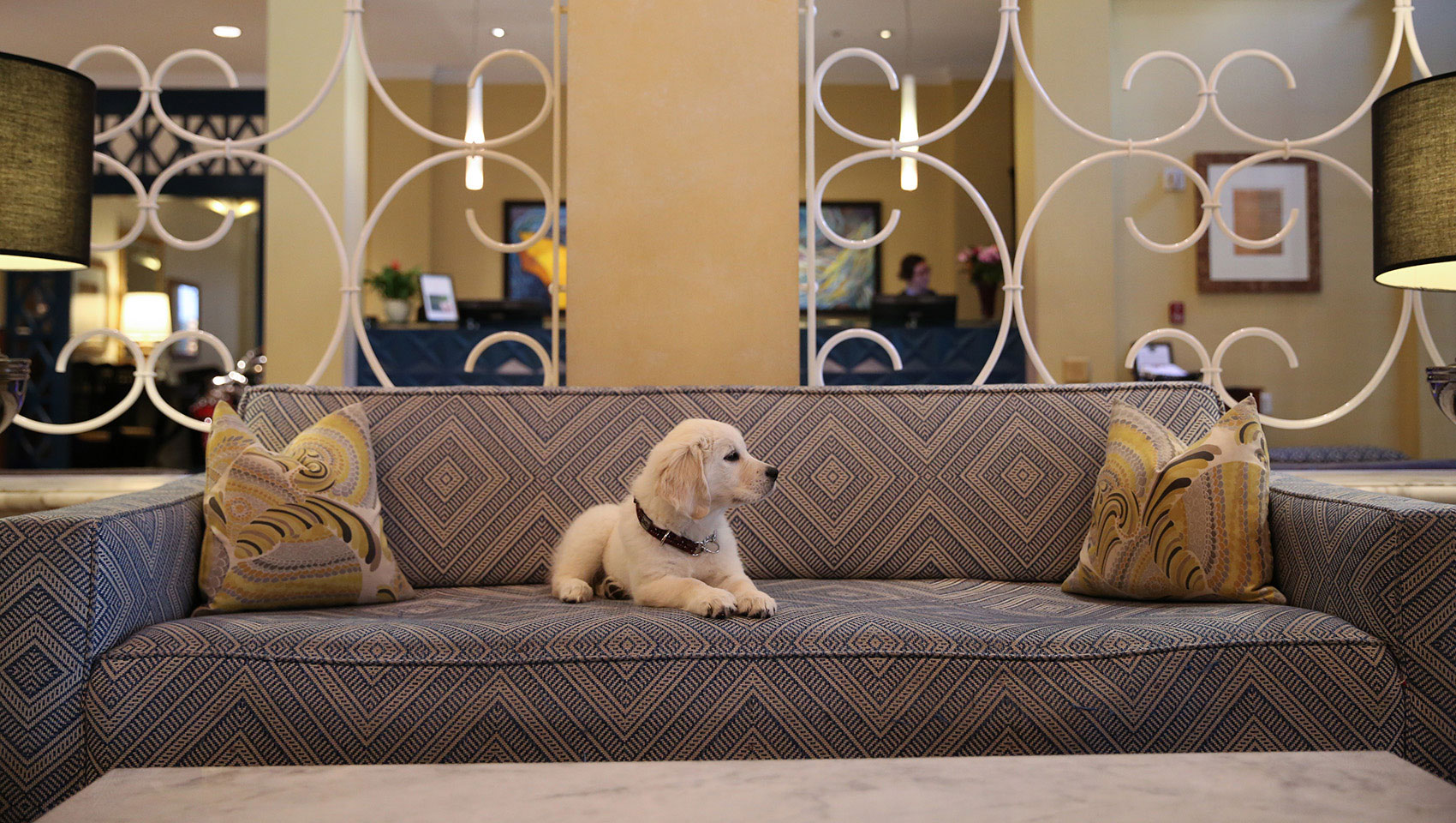Labrador Puppy at Hotel Monaco Seattle