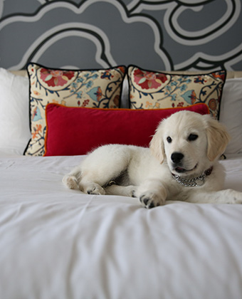 Pet Friendly Hotel in Seattle