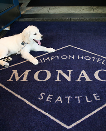 Puppy on leash at Kimpton Monaco Seattle